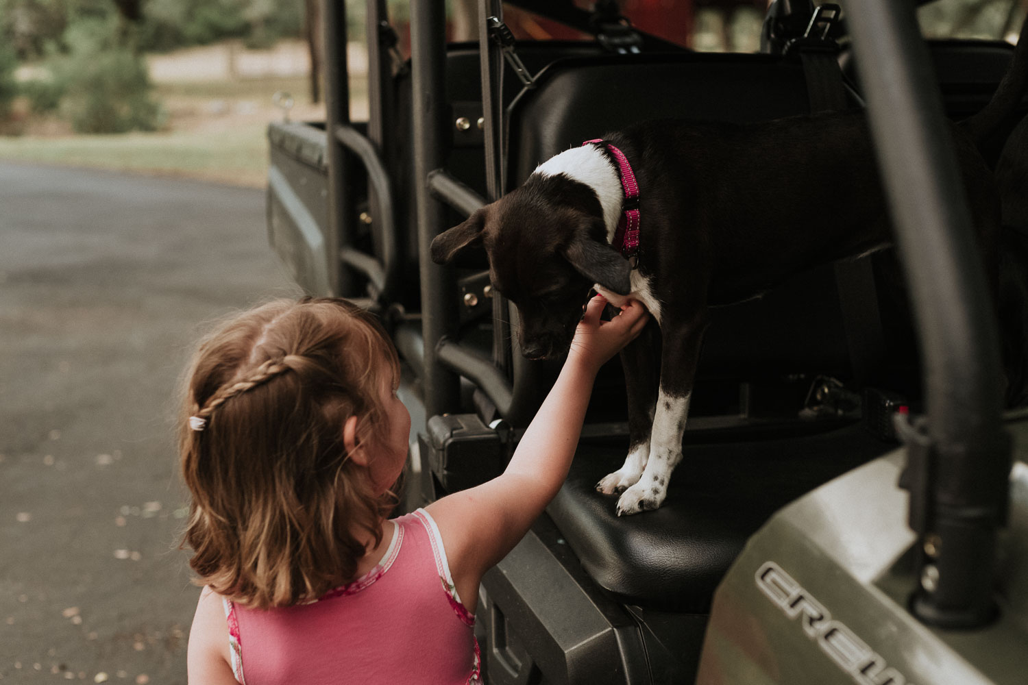 Little girl greets ranch dog at a wedding rehearsal dinner in the Hill Country, Bulverde, Texas